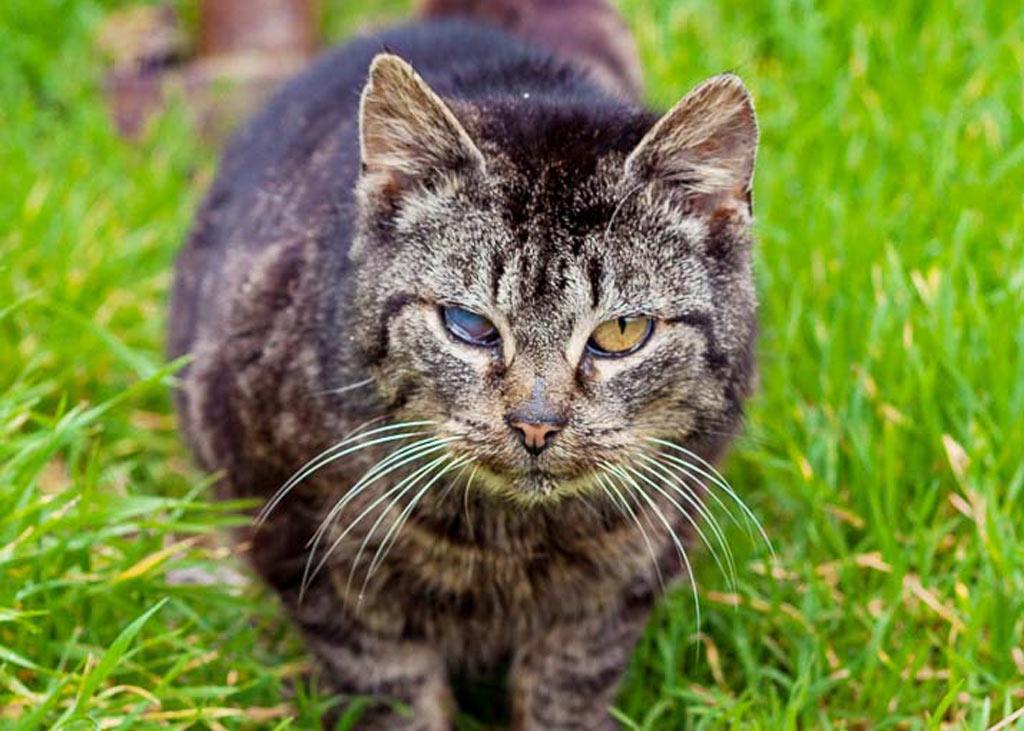 Kranke Katze im Hunsrück