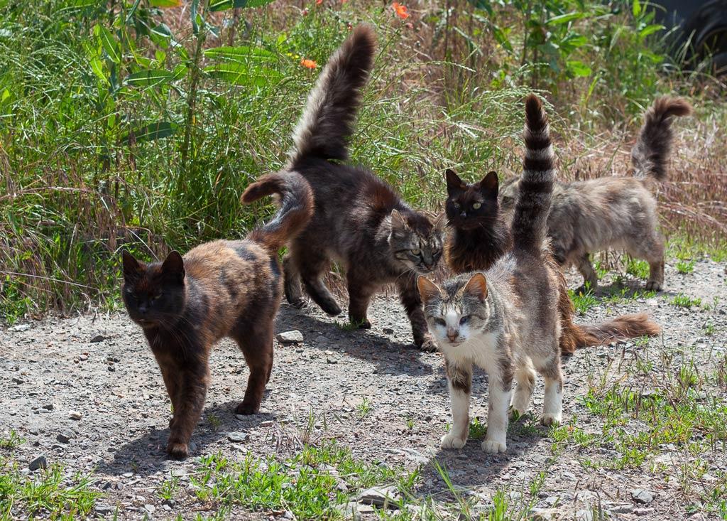 Katzen warten bereits auf die Tierschützer