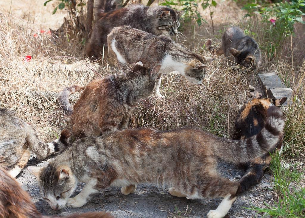 Verwilderte, kranke Katzen im Hunsrück