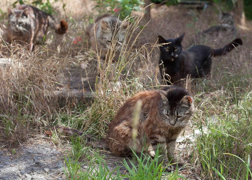 Verwilderte Katzen im Hunsrück