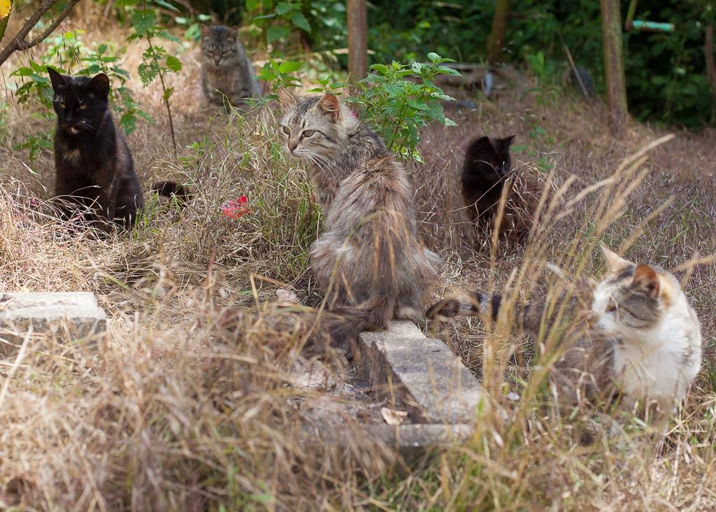 Viele verwilderte Hauskatzen im Hunsrück
