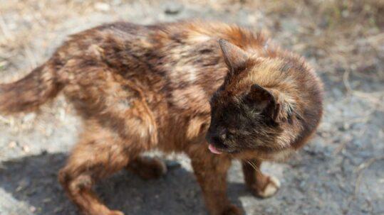 Dünne, kranke Katze auf einem Hof