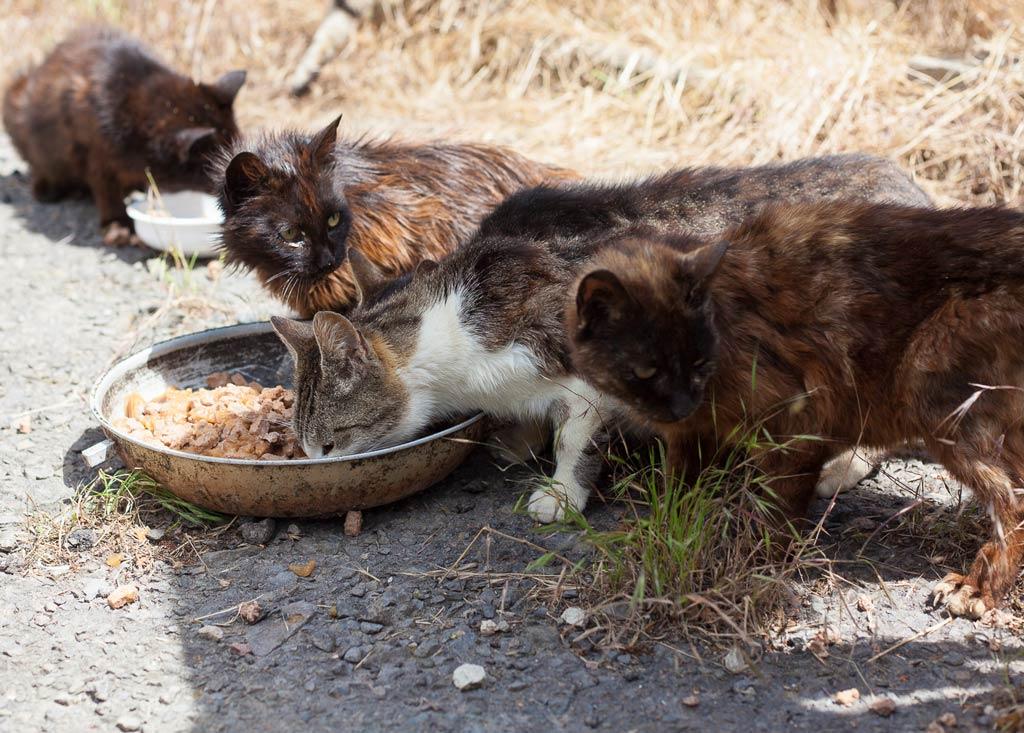 Hungrige Katzen an der Futterstelle