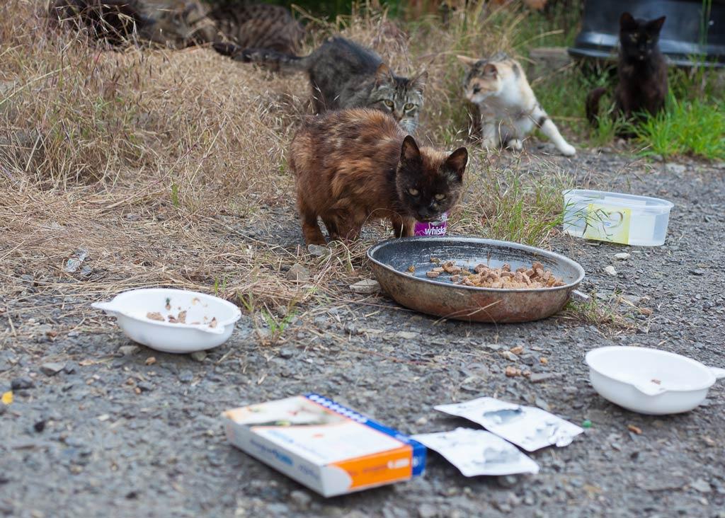 Kranke Katzen mit Futter und Medikamenten
