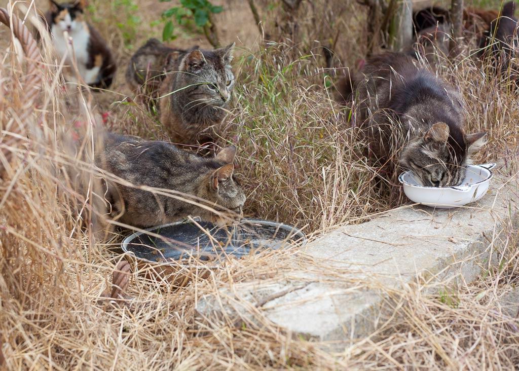Katzen an der Futterstelle