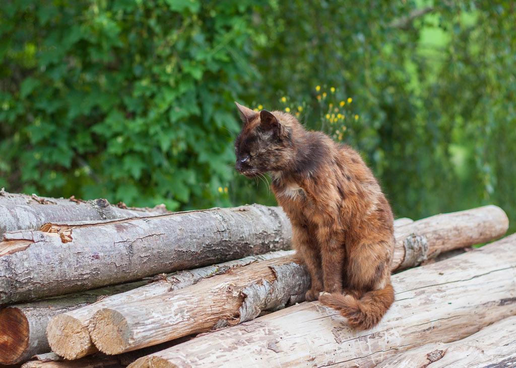 Dünne Katze auf Holz