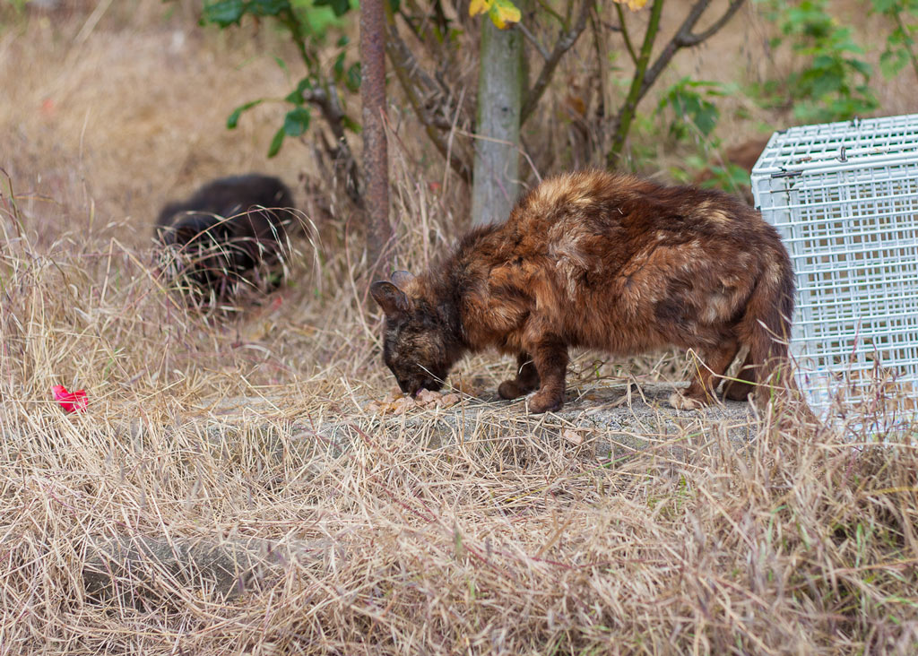 Dünne, unterernährte Katze