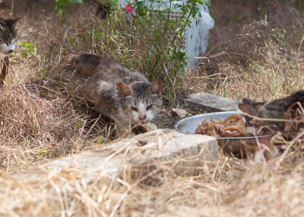 Kranke Katze mit verkrusteten Augen am Futternapf