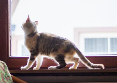 Verwilderte Katze