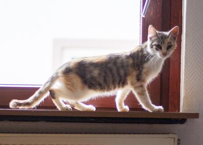 Notfall - Verwilderte Katze abzugeben