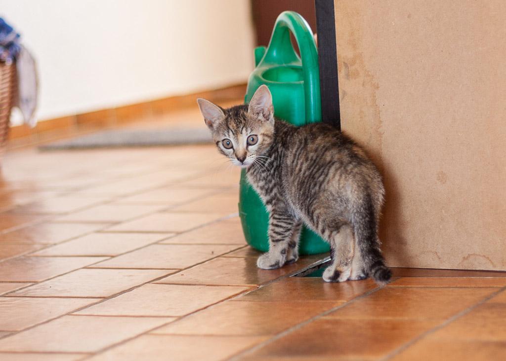 Kätzchen auf der Pflegestelle