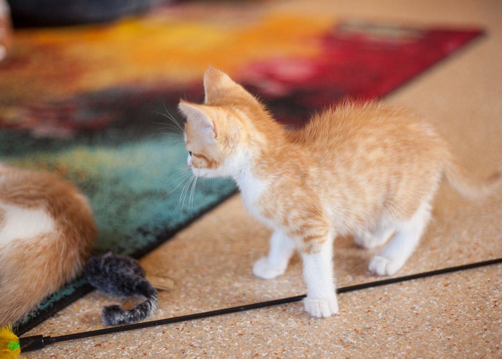 Katzenkind mit rotem Fell