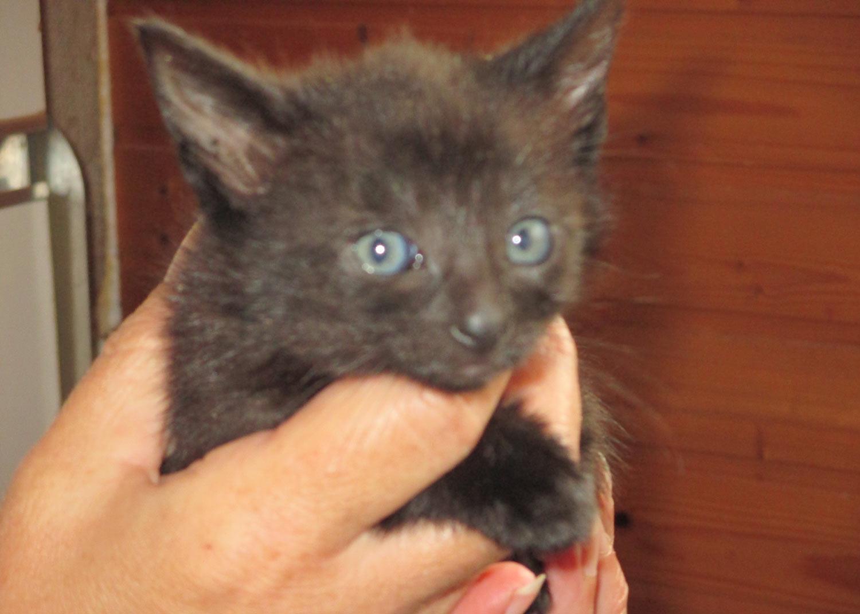 Junge Kätzchen gerettet